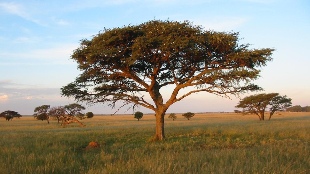 Africa and Desert